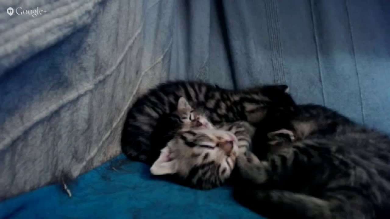 Kittenlive cam