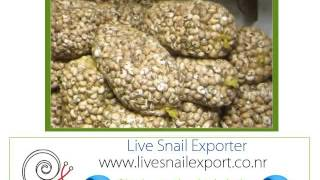 elevage producteurs Exportation escargot Helix pomatia
