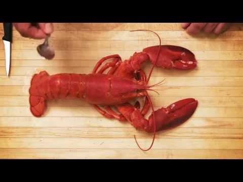 Comment décortiquer le homard