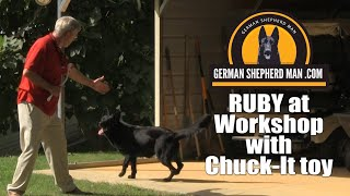 "How I train dogs to ""Workshop"" with Ruby & GSM"