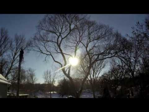 American Elm Pruning