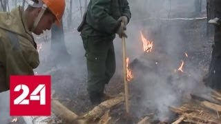 Смотреть видео Лесные пожары наступают: в Бурятии при тушении огня погибли два человека - Россия 24 онлайн
