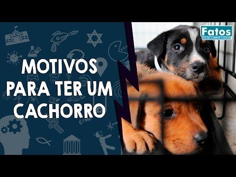 Veja o video – 10 Ótimos motivos para ter um cachorro