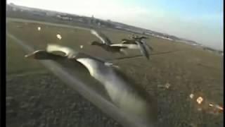 Парамотор в стае гусей