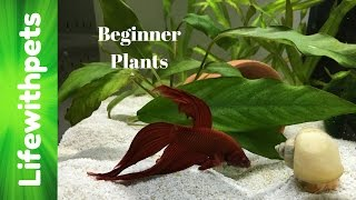 Easy to Grow Beginner Aquarium Plants