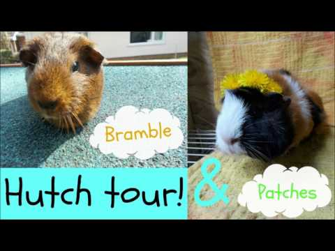 Bramble and Patches hutch and run tour March/April 2017 ]Guinea pigs r cute