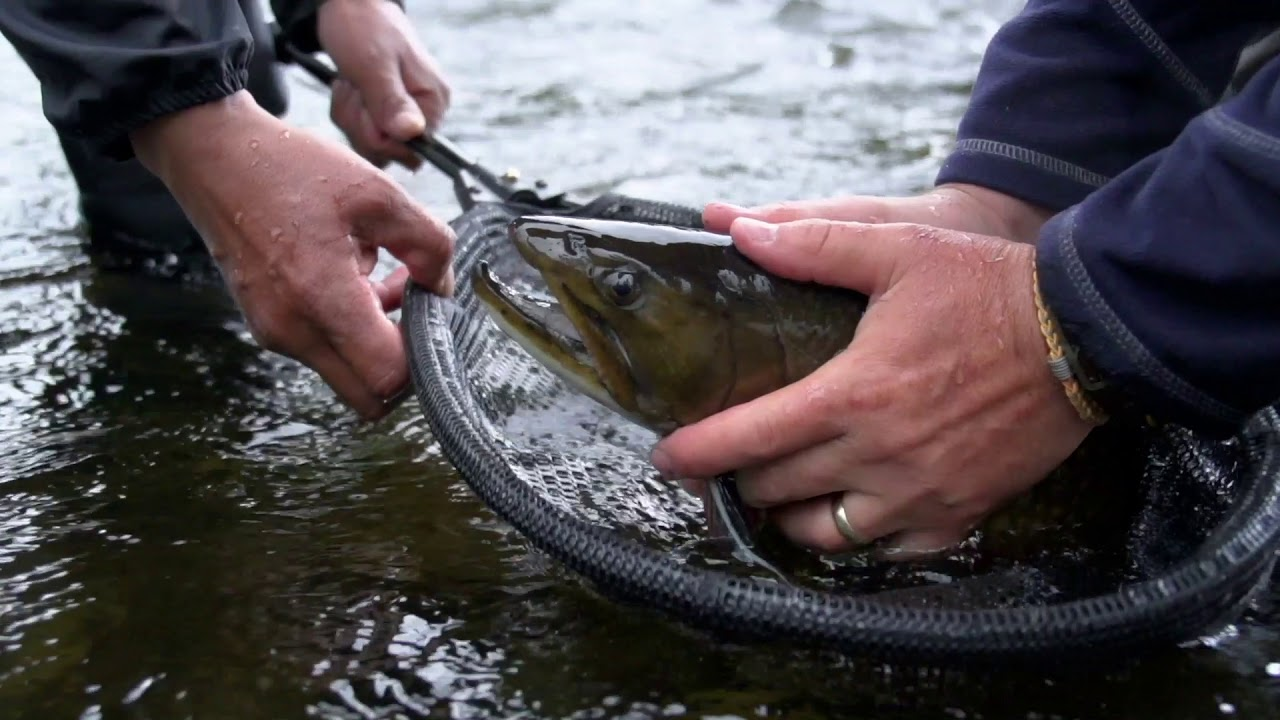 An Intro to and Refresher on Brook Trout - Wilderness North