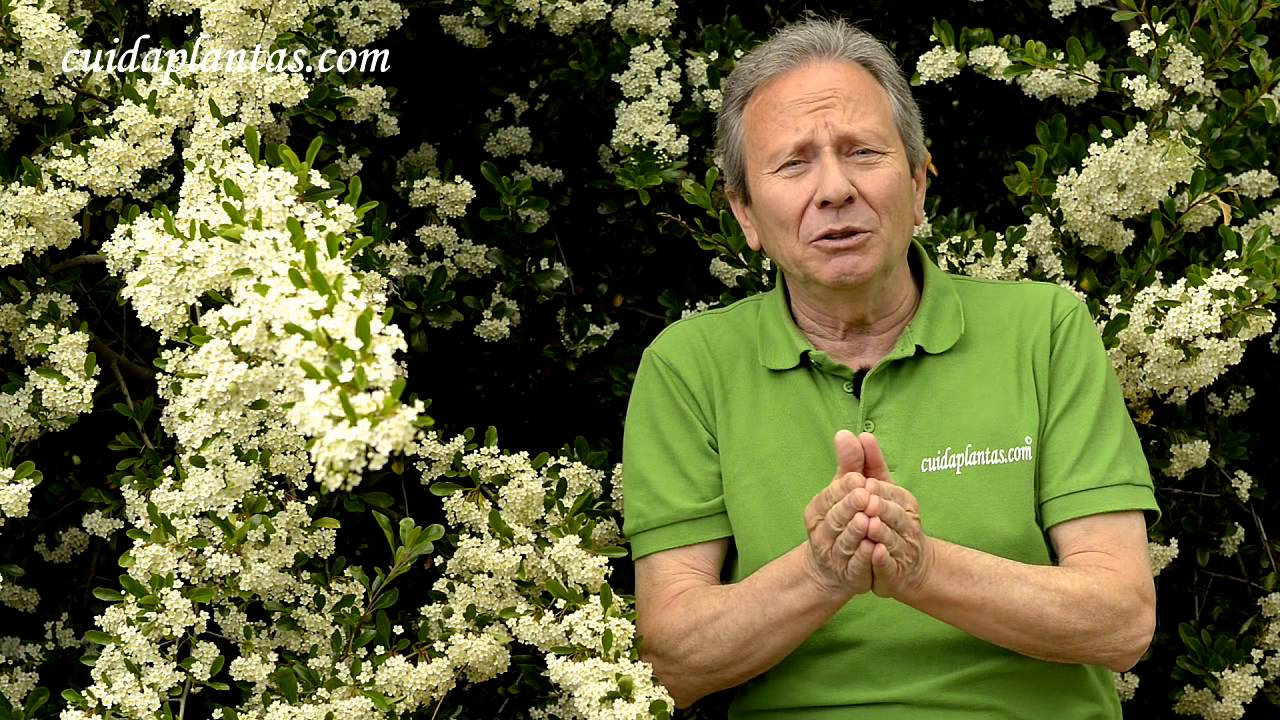 Arbustos de jardin un mill n de flores youtube for Arbustos jardin