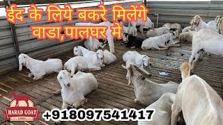 3 NOOR | FROM HARAD GOATS | WADA,PALGHAR PART2 | 8097541417