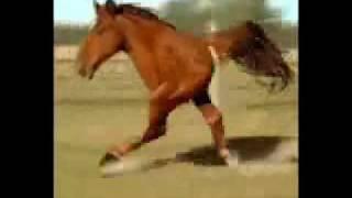 Funny 2 Legged Horse