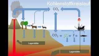 Auswirkungen der Ozeanversauerung auf Kalkalgen