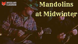 Mandolins at Midwinter