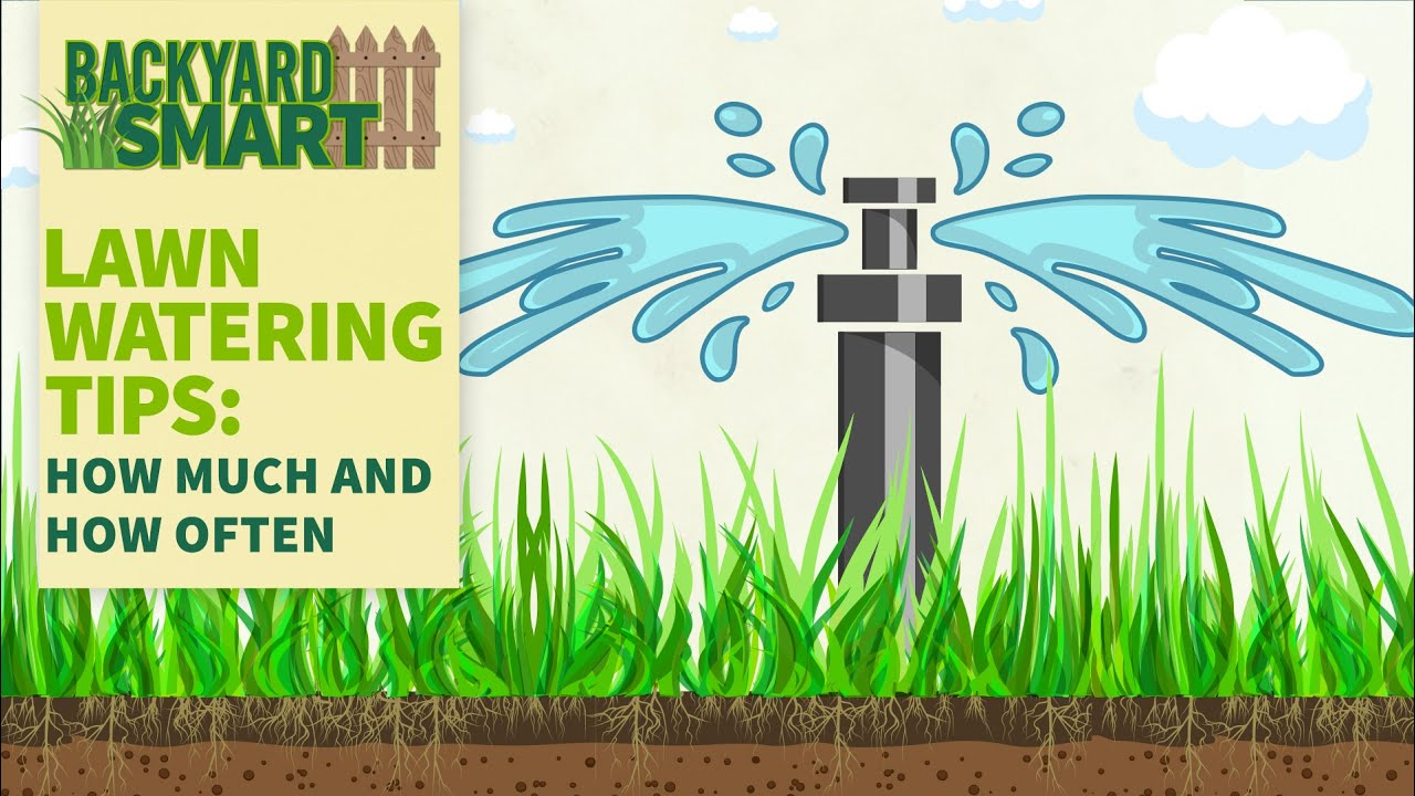 Lawn Watering Tips: How Much and How Often   Backyard Smart: Make it Rain   YouTube