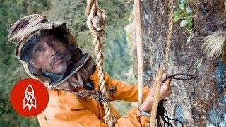 The Death-Defying Climb for Honey