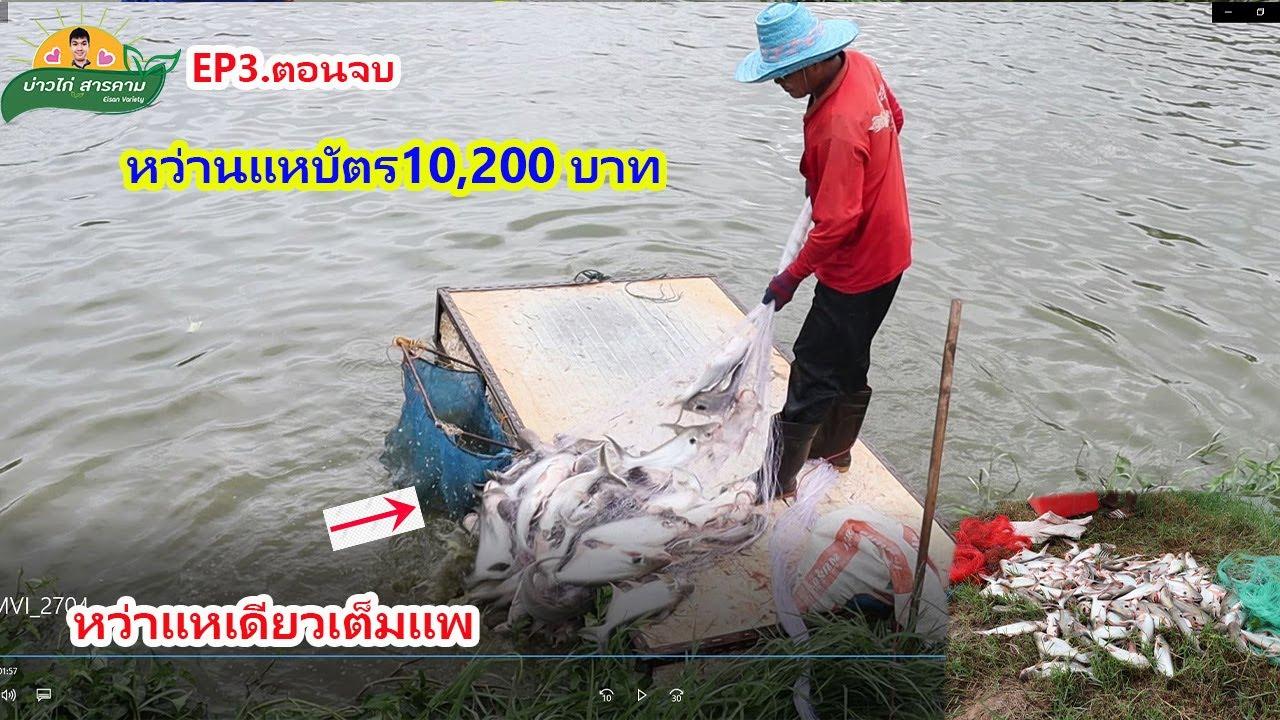 #หว่านแหเดียวเต็มแพ EP3.ตอนจบ ลงแหจับปลาบัตร10,200บาท #คลิปที่68