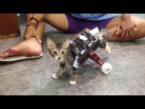 840+ Kursi Roda Kucing HD Terbaik