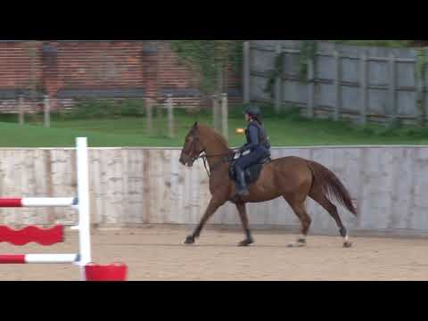 Young Horse Showjumping Training Part 4