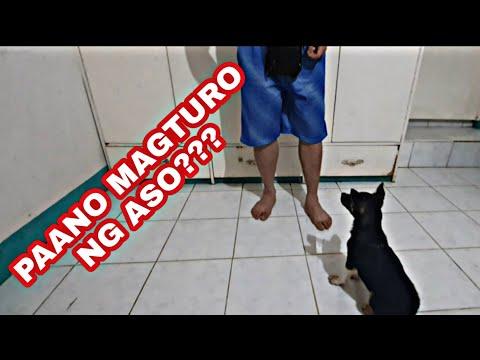 PAANO MAGTURO NG ASO?