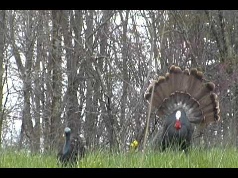 2011 youth turkey hunt