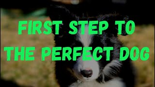 How to Find the Perfect Breeder