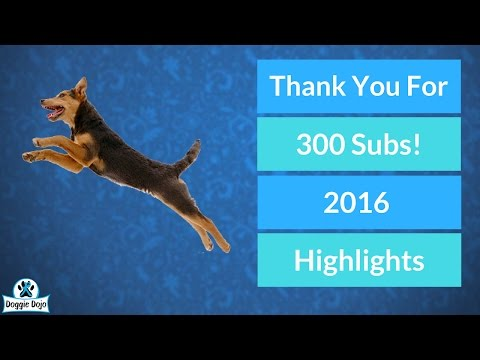 2016 Highlights Review - Thank You for 300 Subscribers!
