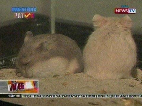 BT: Exotic pets, pwedeng ipanregalo sa Pasko
