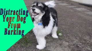 ►►distracting Your Dog From Barking | How To Train A Dog Not To Bark
