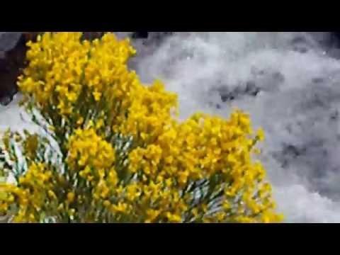 La Vallée des fleurs à Eyne (PO) poster