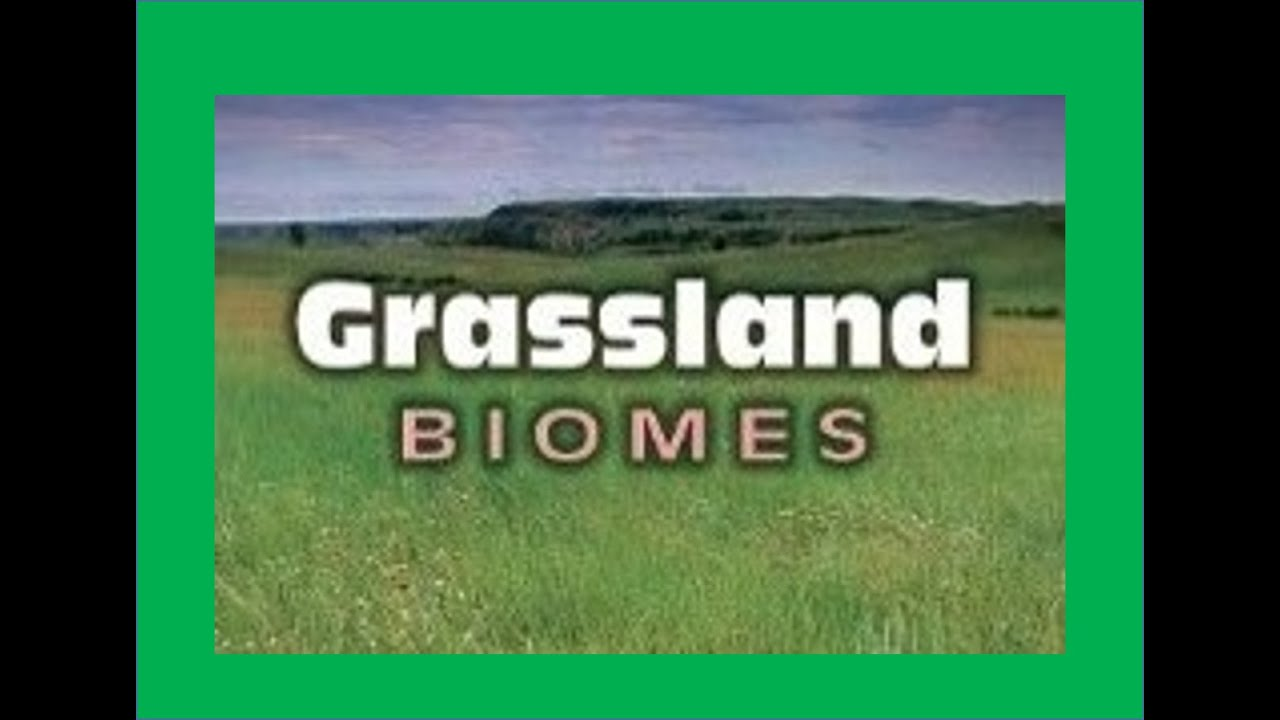 Temperate Grasslands Biomes - Information & Facts for kids - YouTube