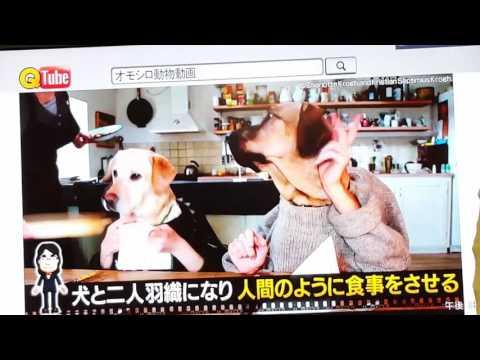 犬のレストランと中岡
