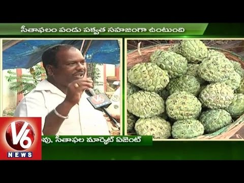 Custard Apple farming techniques | Heavy demand for Custard apple | Sagubadi - V6 News