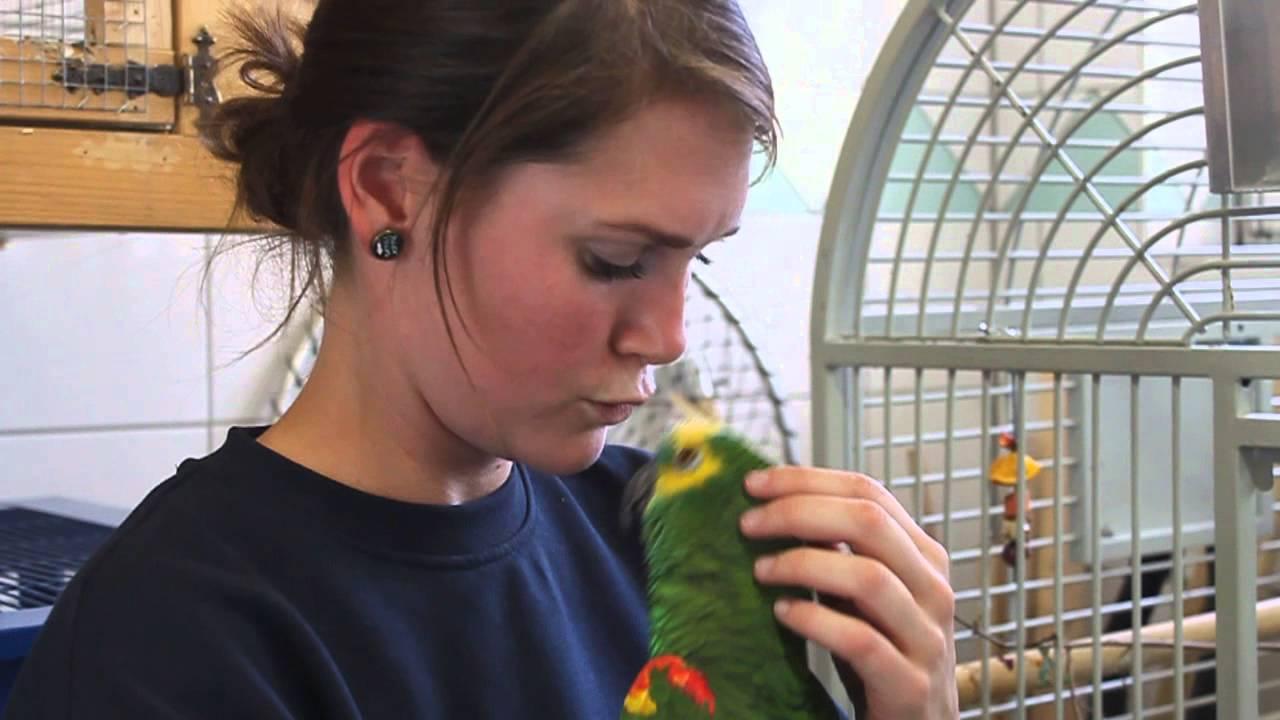 Tierheim Papagei