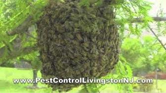BEES NEST NJ - BEE exterminator LIVINGSTON NJ