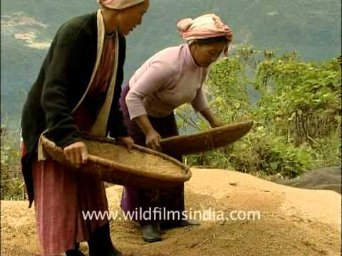 Women threshing grain in Arunachal Pradesh