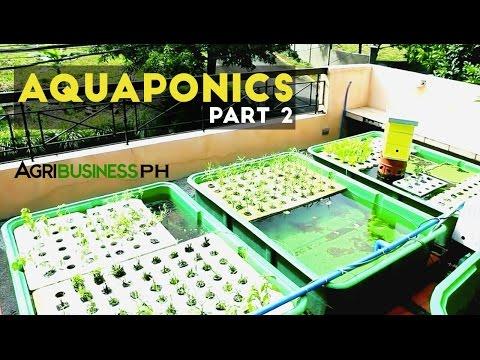 Aquaponics Part 2 : Aquaponics System and DIY | Agribusiness Philippines