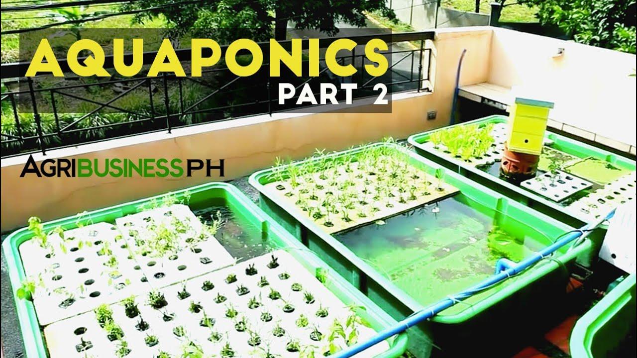 Aquaponics Part 2 Aquaponics System And Diy