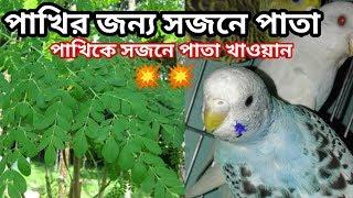 পাখিকে সজনে পাতা খাওয়ান/ Birds best food & breeding supplement Bengali.