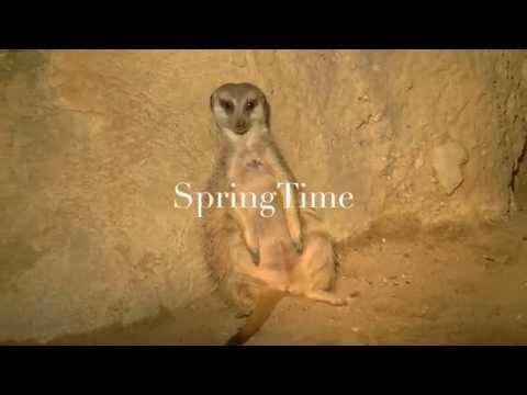 Springtime ( Diergaarde Blijdorp )