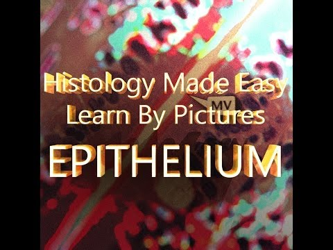 Histology Made Easy: Epithelium (Learn By Pictures)