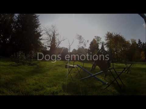 Dog jumping dressage saut chien Go Pro