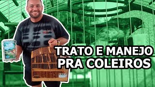 TRATO E MANEJO PRA COLEIROS   Mago dos Coleiros