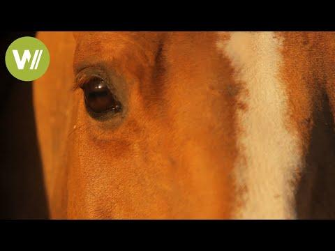 Le Cheval : un Être Intelligent (Documentaire de 2011 en HD 1080p)