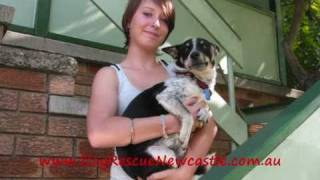 Tucker, Fox Terrier X Cattle Dog - Has Been Adopted