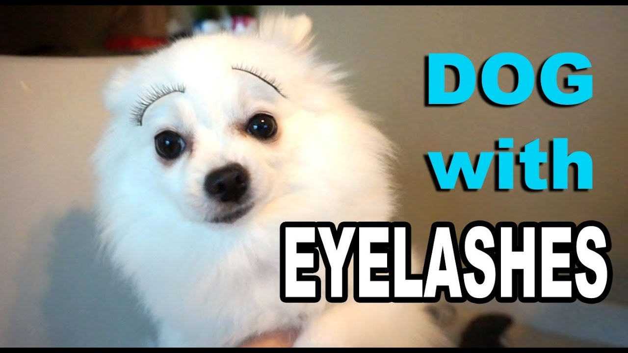 Dog With Eyelashes Youtube