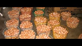 A Typical Layer Poultry Farming Business in Nigeria