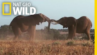 For Elephants, Two Seasons Reign Supreme | Nat Geo Wild