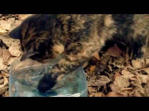 Fisher cat kitty cat vs fish 0 1 funny videos cat and for Moving fish for cats