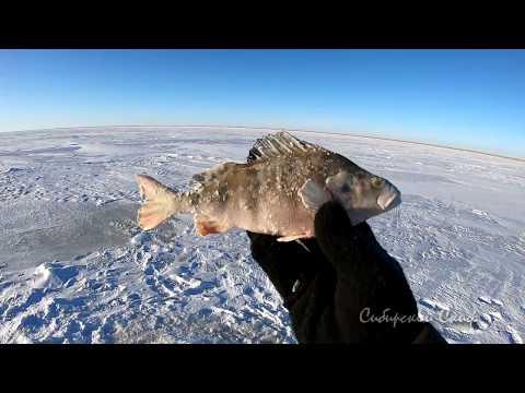 Рыбалка На Окуня #МотоБуксАляска#Чаны#СибирскийСкиф#