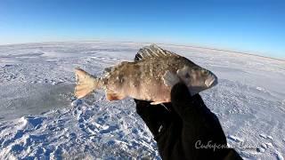 Рыбалка На Окуня Оз Чаны МотоБуксАляска Чаны СибирскийСкиф