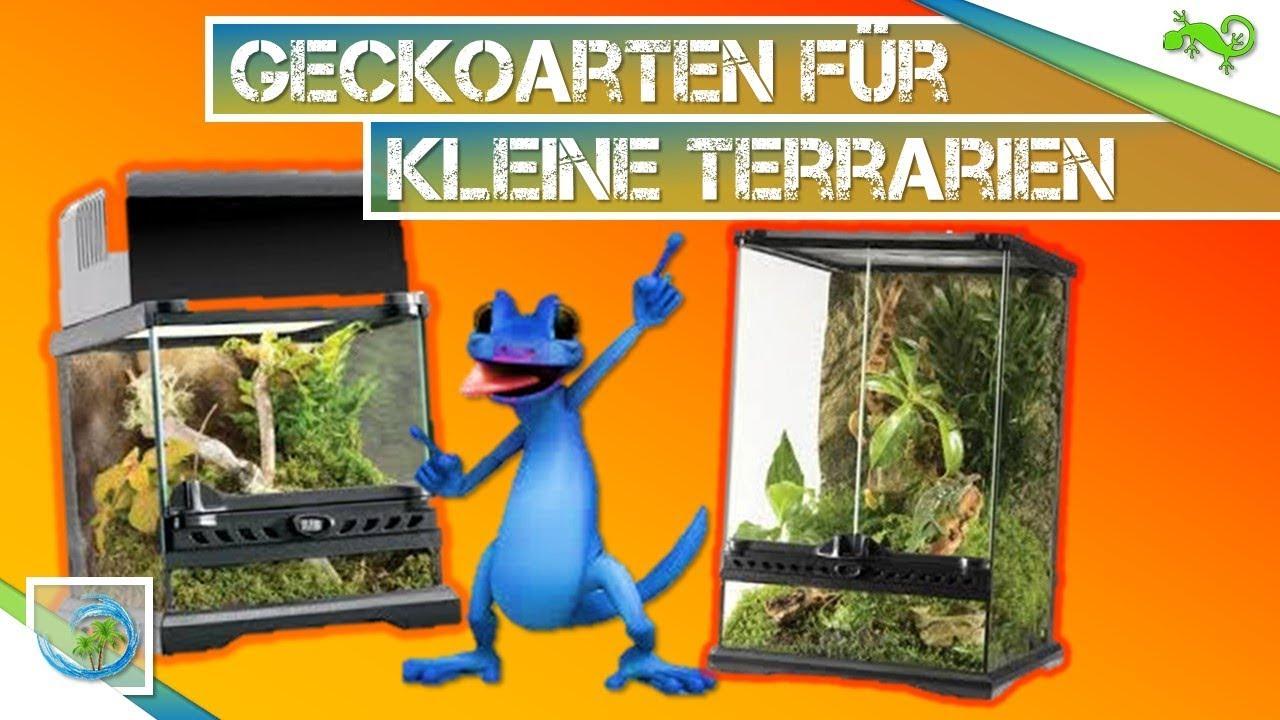 geckoarten f r kleine terrarien welche passen tier wissen youtube. Black Bedroom Furniture Sets. Home Design Ideas